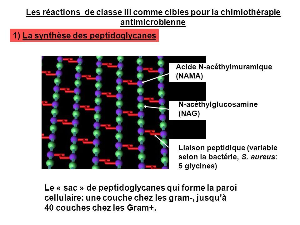 Acide N-acéthylmuramique (NAMA) N-acéthylglucosamine (NAG) Liaison peptidique (variable selon la bactérie, S. aureus: 5 glycines) Le « sac » de peptid