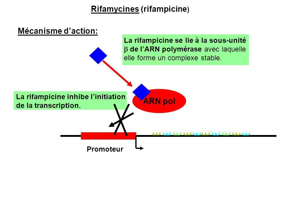 ARN pol Promoteur Rifamycines (rifampicine ) Mécanisme d'action: La rifampicine se lie à la sous-unité  de l'ARN polymérase avec laquelle elle forme