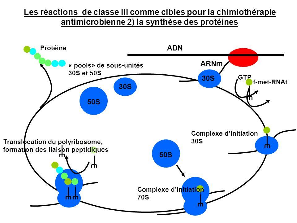 ADN ARNm GTP f-met-RNAt Complexe d'initiation 30S Translocation du polyribosome, formation des liaison peptidiques 30S 50S 30S Protéine « pools» de so