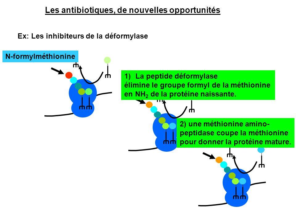 Les antibiotiques, de nouvelles opportunités Ex: Les inhibiteurs de la déformylase N-formylméthionine 1)La peptide déformylase élimine le groupe formy