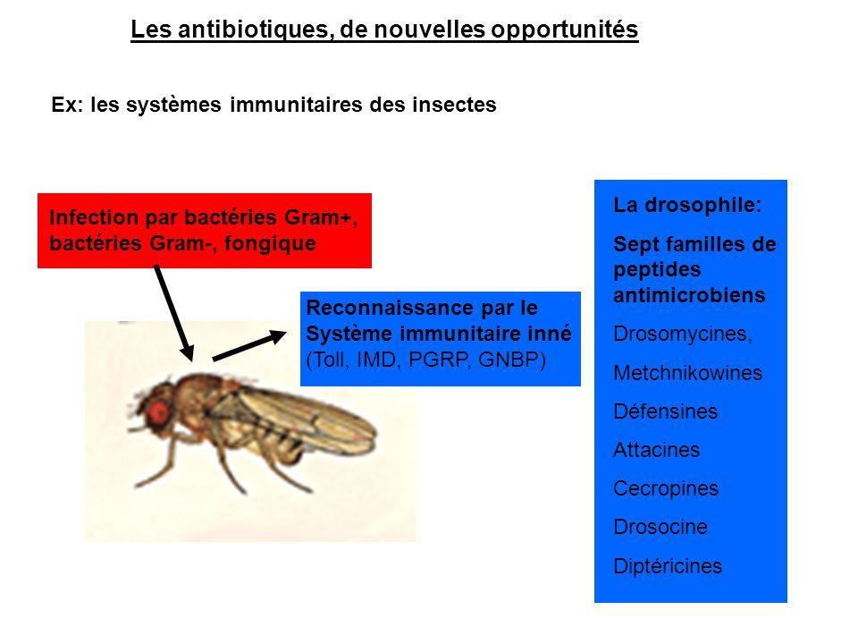 Les antibiotiques, de nouvelles opportunités Ex: les systèmes immunitaires des insectes Infection par bactéries Gram+, bactéries Gram-, fongique La dr