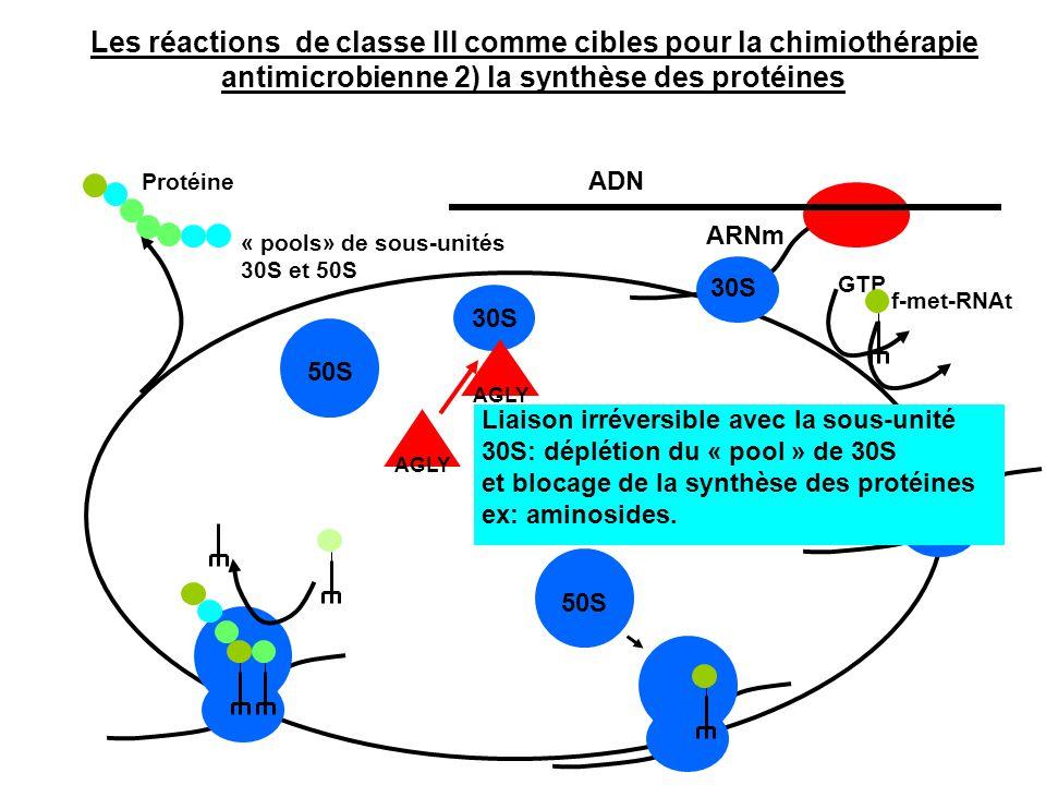 ADN ARNm GTP f-met-RNAt 30S 50S 30S Protéine « pools» de sous-unités 30S et 50S AGLY Liaison irréversible avec la sous-unité 30S: déplétion du « pool
