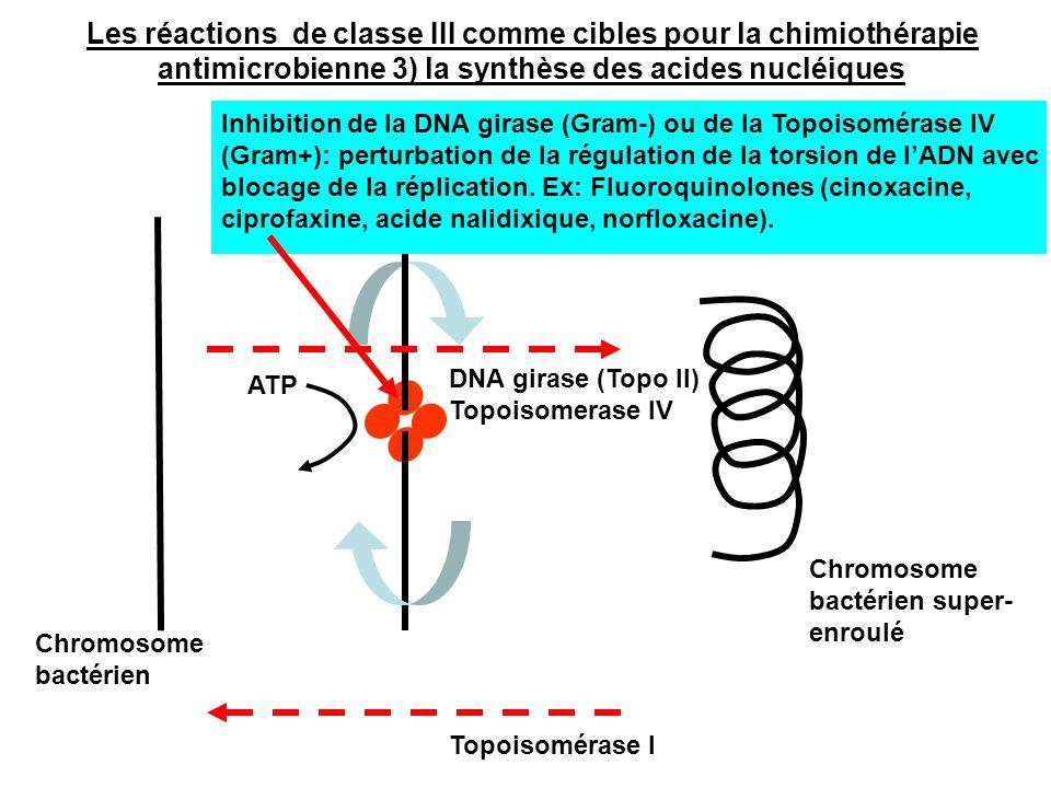 DNA girase (Topo II) Topoisomerase IV Topoisomérase I Chromosome bactérien Chromosome bactérien super- enroulé Inhibition de la DNA girase (Gram-) ou