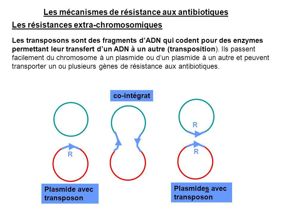 Les mécanismes de résistance aux antibiotiques Les résistances extra-chromosomiques Les transposons sont des fragments d'ADN qui codent pour des enzym