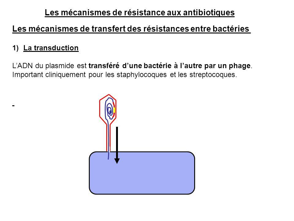 Les mécanismes de transfert des résistances entre bactéries 1)La transduction L'ADN du plasmide est transféré d'une bactérie à l'autre par un phage. I