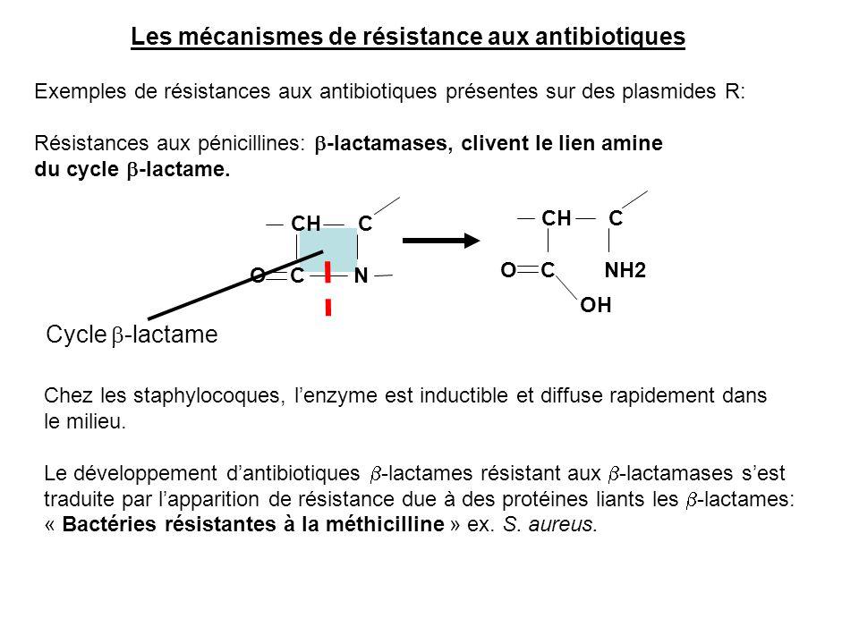 CH C O C NH2 Les mécanismes de résistance aux antibiotiques Exemples de résistances aux antibiotiques présentes sur des plasmides R: Résistances aux p