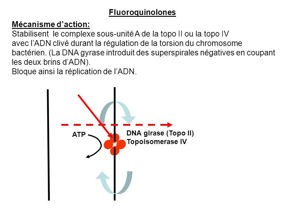 DNA girase (Topo II) Topoisomerase IV ATP Fluoroquinolones Mécanisme d'action: Stabilisent le complexe sous-unité A de la topo II ou la topo IV avec l