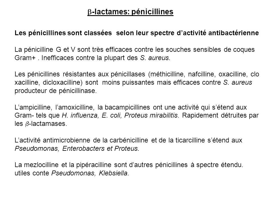 Les pénicillines sont classées selon leur spectre d'activité antibactérienne La pénicilline G et V sont très efficaces contre les souches sensibles de