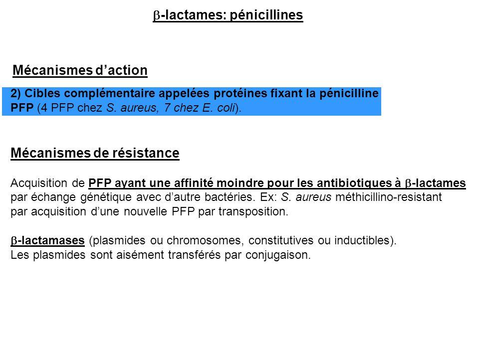  -lactames: pénicillines Mécanismes d'action 2) Cibles complémentaire appelées protéines fixant la pénicilline PFP (4 PFP chez S. aureus, 7 chez E. c