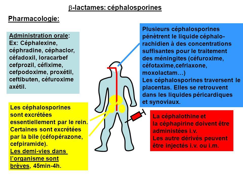 Pharmacologie: Administration orale: Ex: Céphalexine, céphradine, céphaclor, céfadoxil, loracarbef cefprozil, céfixime, cefpodoxime, proxétil, ceftibu