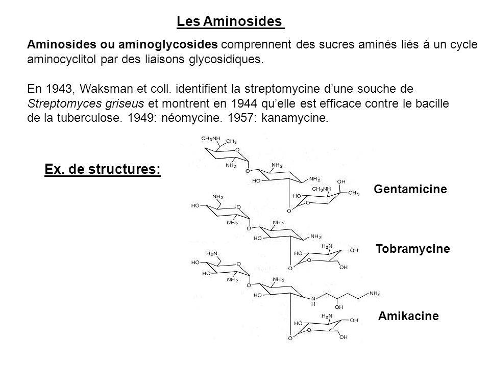 Les Aminosides Aminosides ou aminoglycosides comprennent des sucres aminés liés à un cycle aminocyclitol par des liaisons glycosidiques. En 1943, Waks