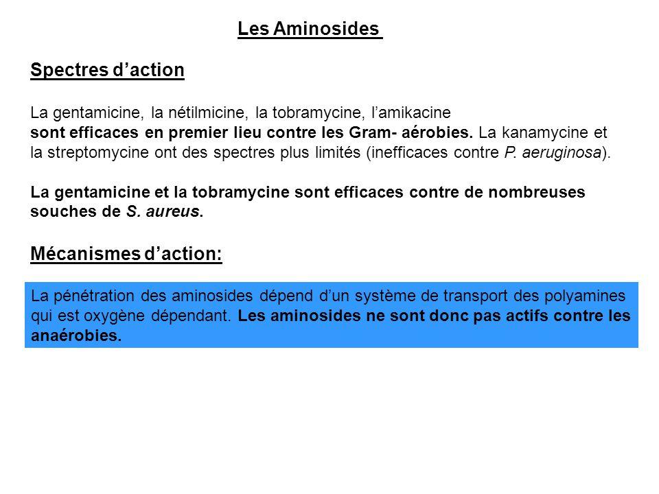 Spectres d'action La gentamicine, la nétilmicine, la tobramycine, l'amikacine sont efficaces en premier lieu contre les Gram- aérobies. La kanamycine