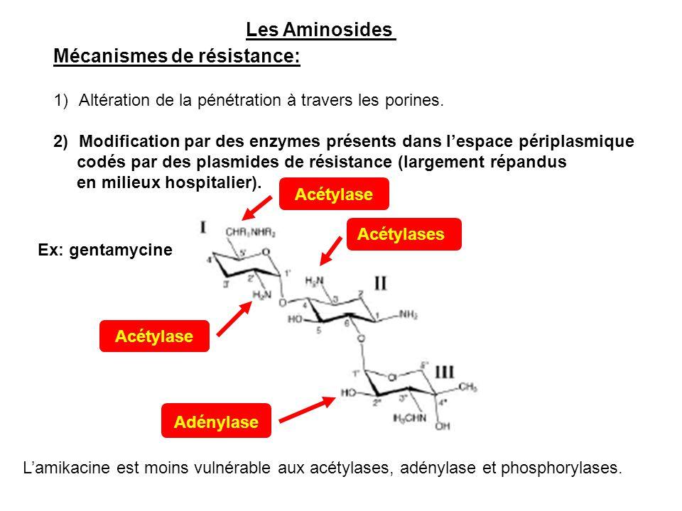 Les Aminosides Mécanismes de résistance: 1)Altération de la pénétration à travers les porines. 2)Modification par des enzymes présents dans l'espace p