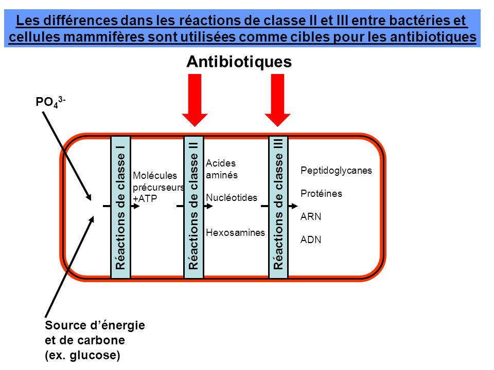 Les réactions de classe II comme cibles pour les antibiotiques Nous avons perdu la capacité de synthétiser certains acides aminés (les acides aminés essentiels) et des précurceurs des acides nucléiques (vitamines) comme le folate.