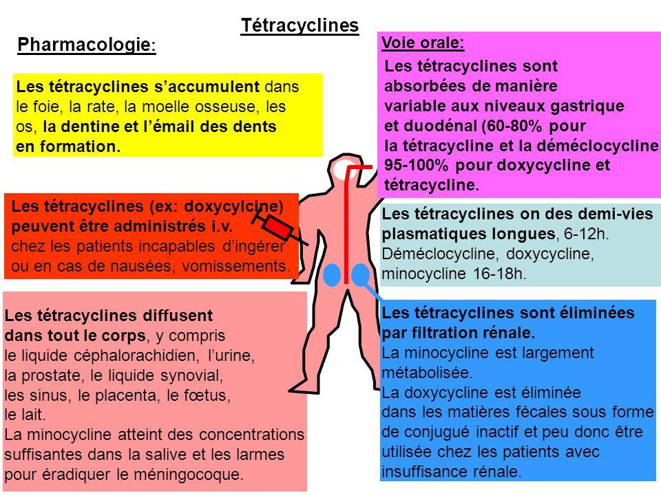 Les tétracyclines diffusent dans tout le corps, y compris le liquide céphalorachidien, l'urine, la prostate, le liquide synovial, les sinus, le placen