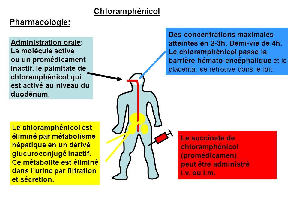 Pharmacologie: Administration orale: La molécule active ou un promédicament inactif, le palmitate de chloramphénicol qui est activé au niveau du duodé