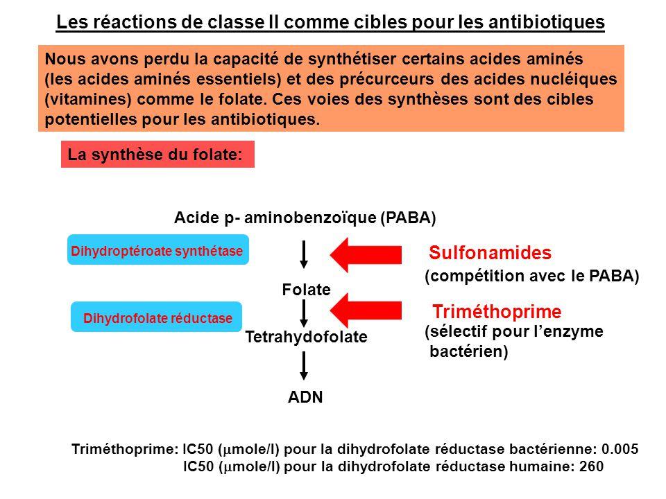 Les réactions de classe III comme cibles pour la chimiothérapie antimicrobienne 1) La synthèse des peptidoglycanes La paroi cellulaire des bactéries Gram- Porine Lypopolysaccharide Espace périplasmique Membrane extérieure Membrane intérieure Lipoprotéines Peptidoglycanes Protéines liant les pénicillines Antibiotiques (30 Å)