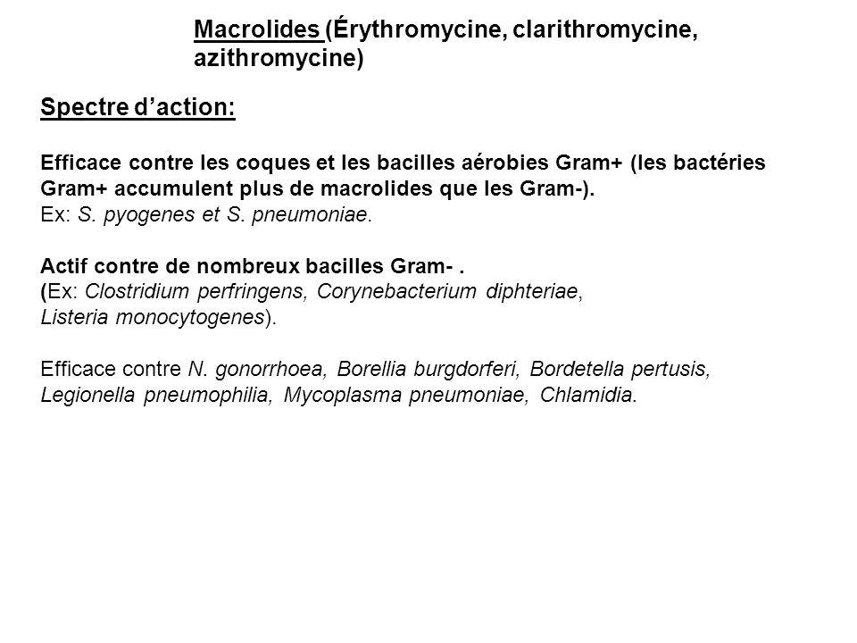 Macrolides (Érythromycine, clarithromycine, azithromycine) Spectre d'action: Efficace contre les coques et les bacilles aérobies Gram+ (les bactéries