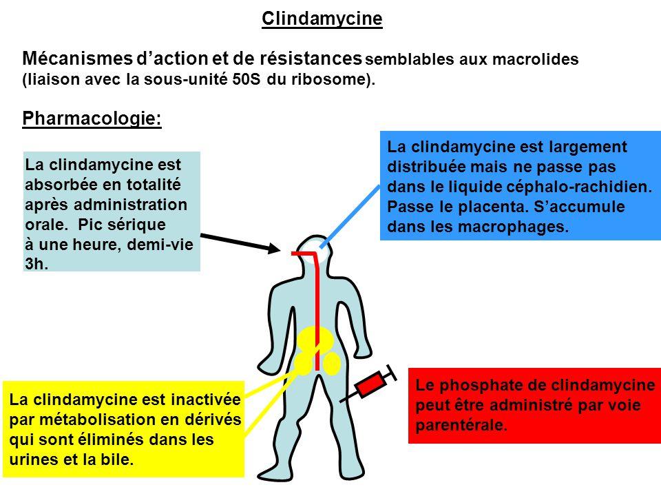 La clindamycine est inactivée par métabolisation en dérivés qui sont éliminés dans les urines et la bile. Pharmacologie: La clindamycine est absorbée