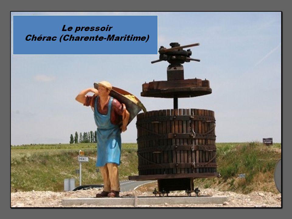 Banc de sardines sous la vigne, Saint Pierre d'Oléron (Charente- Maritime)