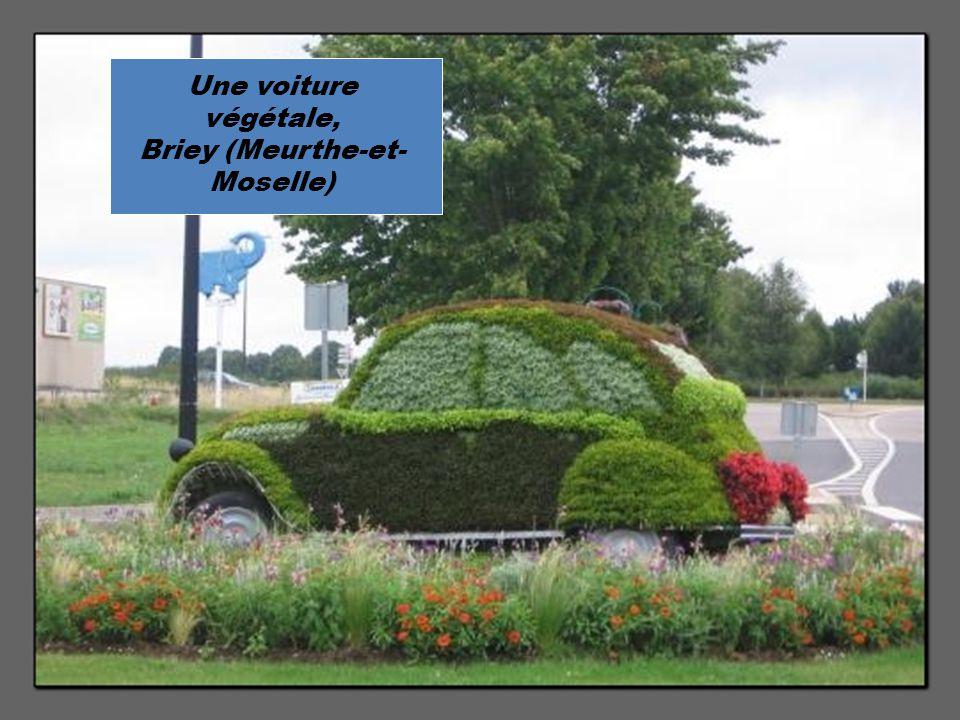 Une voiture végétale, Briey (Meurthe-et- Moselle)