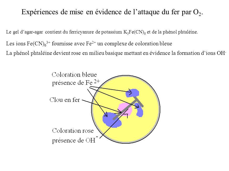 Le gel d'agar-agar contient du ferricyanure de potassium K 3 Fe(CN) 6 et de la phénol phtaléine.
