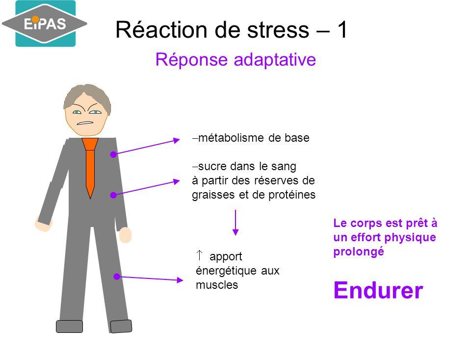 Réaction de stress – 1 Réponse adaptative  métabolisme de base  sucre dans le sang à partir des réserves de graisses et de protéines  apport énergétique aux muscles Le corps est prêt à un effort physique prolongé Endurer