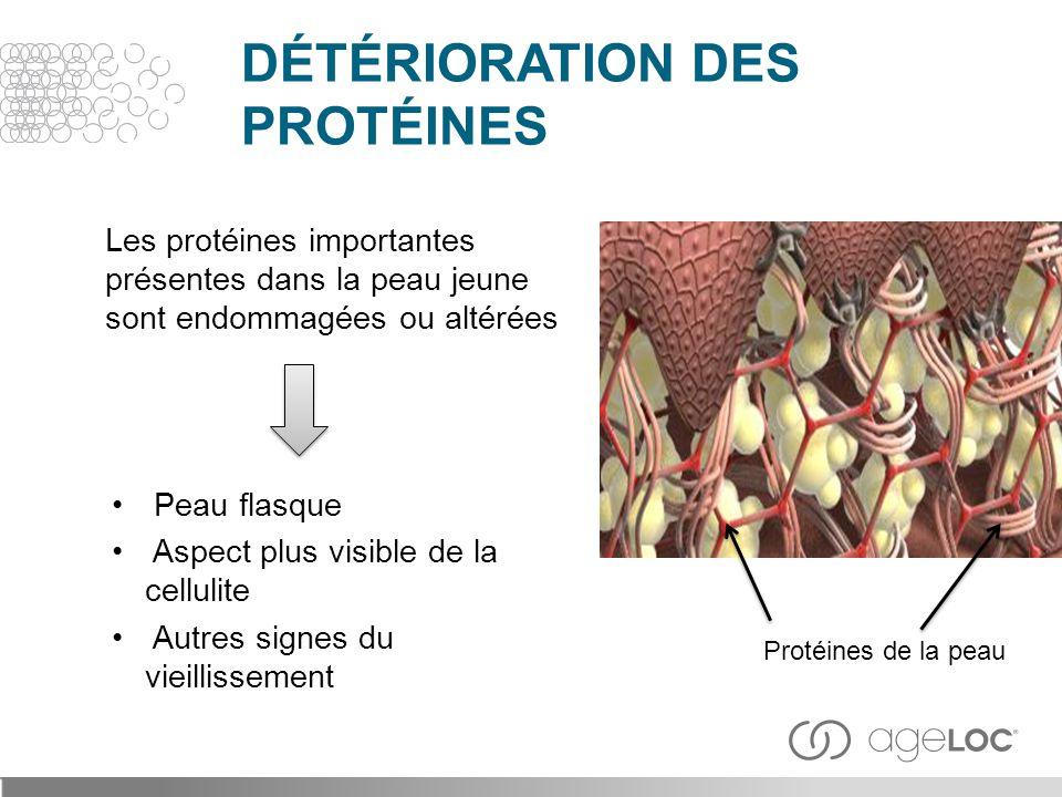 Les protéines importantes présentes dans la peau jeune sont endommagées ou altérées Peau flasque Aspect plus visible de la cellulite Autres signes du