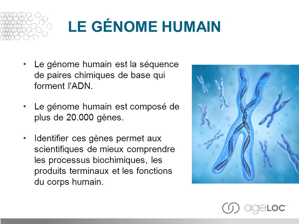 Le génome humain est la séquence de paires chimiques de base qui forment l'ADN. Le génome humain est composé de plus de 20.000 gènes. Identifier ces g