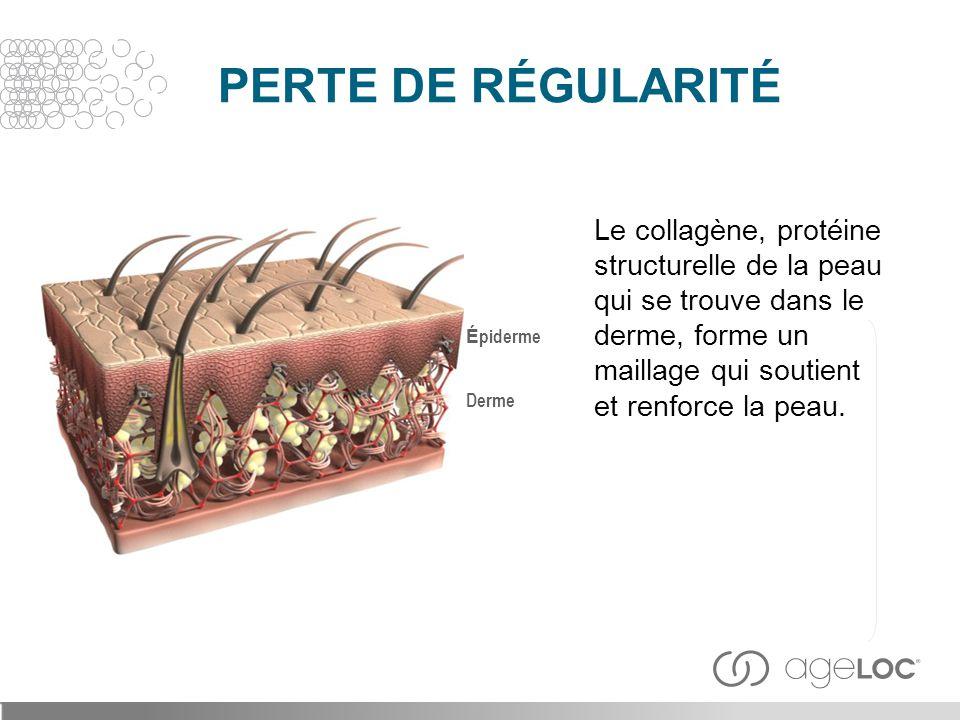 Le collagène, protéine structurelle de la peau qui se trouve dans le derme, forme un maillage qui soutient et renforce la peau. Derme É piderme PERTE