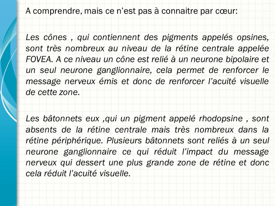 A comprendre, mais ce n'est pas à connaitre par cœur: Les cônes, qui contiennent des pigments appelés opsines, sont très nombreux au niveau de la réti
