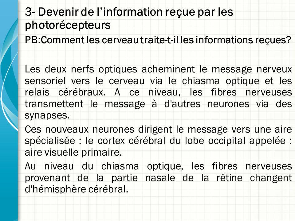 3- Devenir de l'information reçue par les photorécepteurs PB:Comment les cerveau traite-t-il les informations reçues? Les deux nerfs optiques achemine