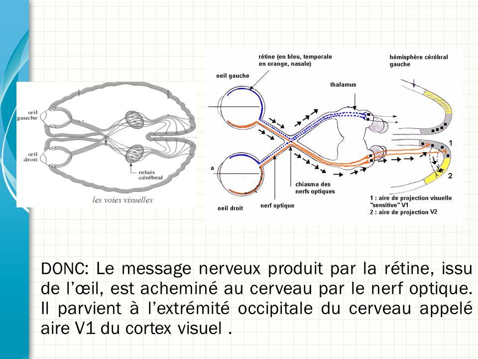 DONC : Le message nerveux produit par la rétine, issu de l'œil, est acheminé au cerveau par le nerf optique. Il parvient à l'extrémité occipitale du c