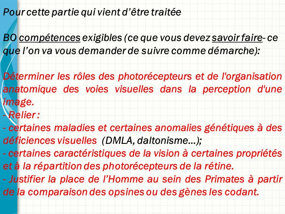 Pour cette partie qui vient d'être traitée BO compétences exigibles (ce que vous devez savoir faire- ce que l'on va vous demander de suivre comme démarche): Déterminer les rôles des photorécepteurs et de l organisation anatomique des voies visuelles dans la perception d une image.
