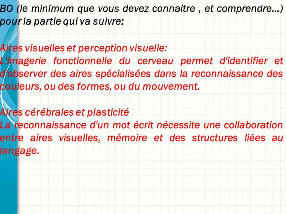 BO (le minimum que vous devez connaitre, et comprendre…) pour la partie qui va suivre: Aires visuelles et perception visuelle: L'imagerie fonctionnell