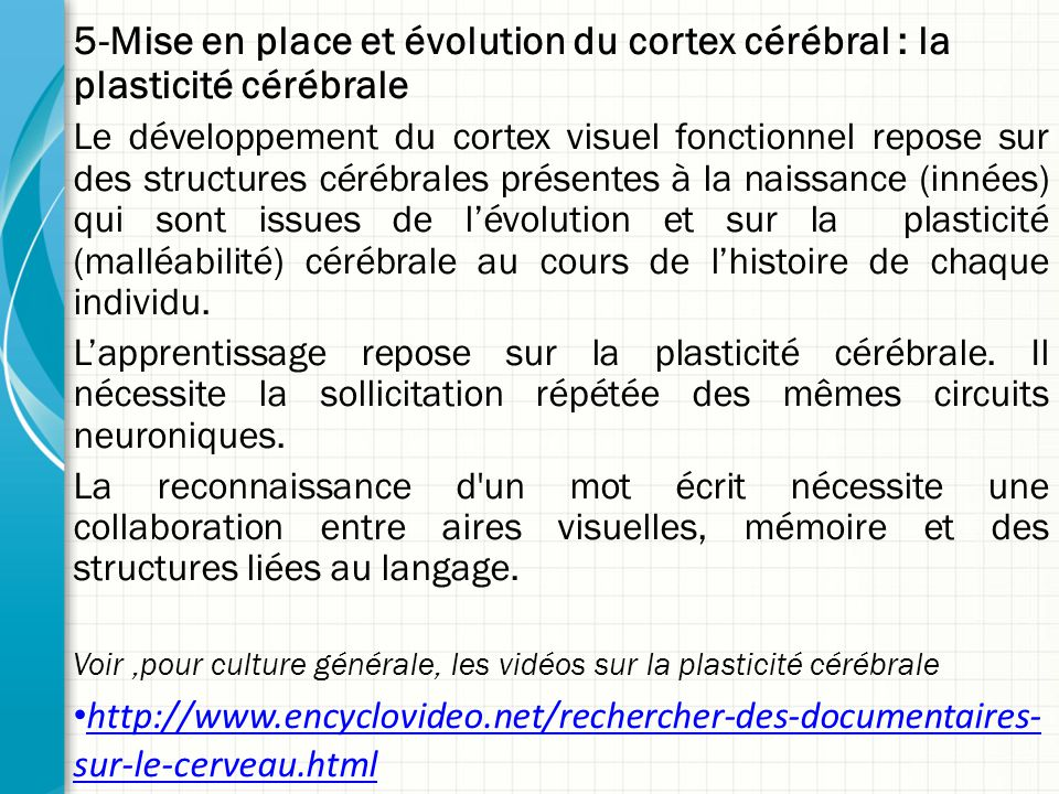 5-Mise en place et évolution du cortex cérébral : la plasticité cérébrale Le développement du cortex visuel fonctionnel repose sur des structures cérébrales présentes à la naissance (innées) qui sont issues de l'évolution et sur la plasticité (malléabilité) cérébrale au cours de l'histoire de chaque individu.