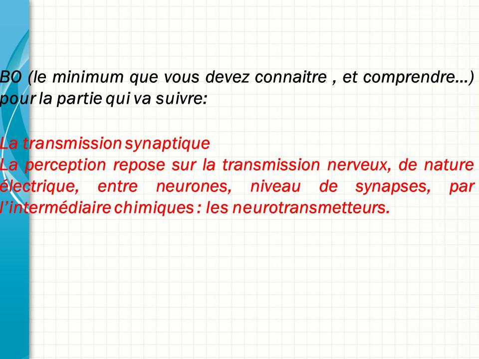 BO (le minimum que vous devez connaitre, et comprendre…) pour la partie qui va suivre: La transmission synaptique La perception repose sur la transmission nerveux, de nature électrique, entre neurones, niveau de synapses, par l'intermédiaire chimiques : les neurotransmetteurs.