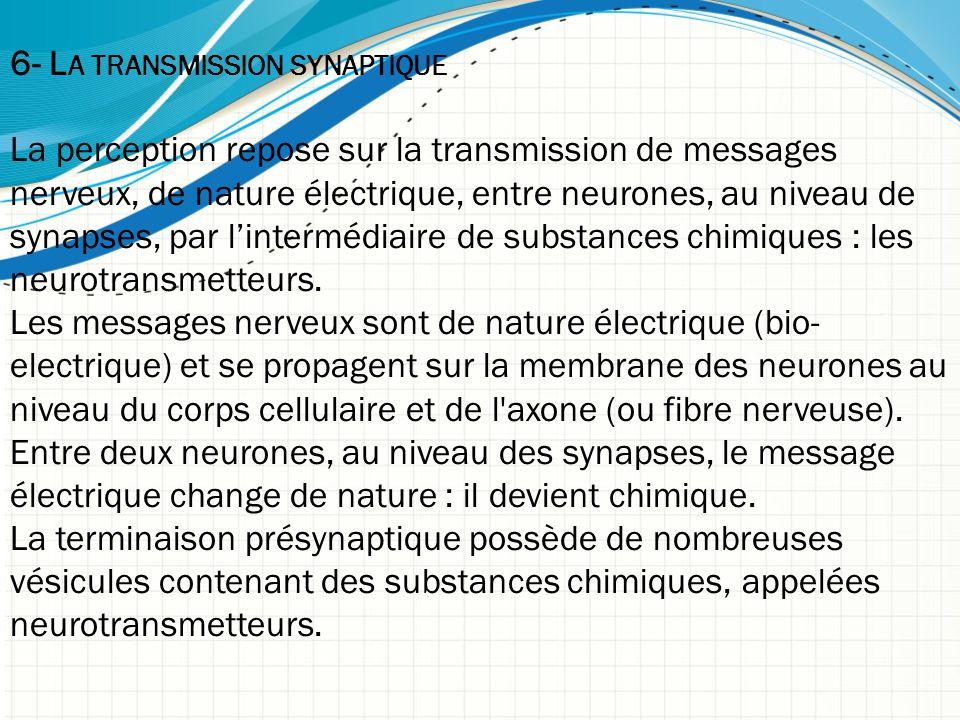 6- L A TRANSMISSION SYNAPTIQUE La perception repose sur la transmission de messages nerveux, de nature électrique, entre neurones, au niveau de synapses, par l'intermédiaire de substances chimiques : les neurotransmetteurs.