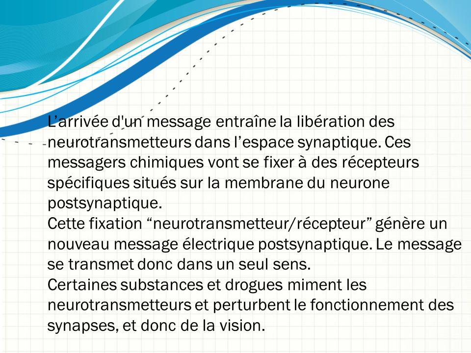 L'arrivée d'un message entraîne la libération des neurotransmetteurs dans l'espace synaptique. Ces messagers chimiques vont se fixer à des récepteurs