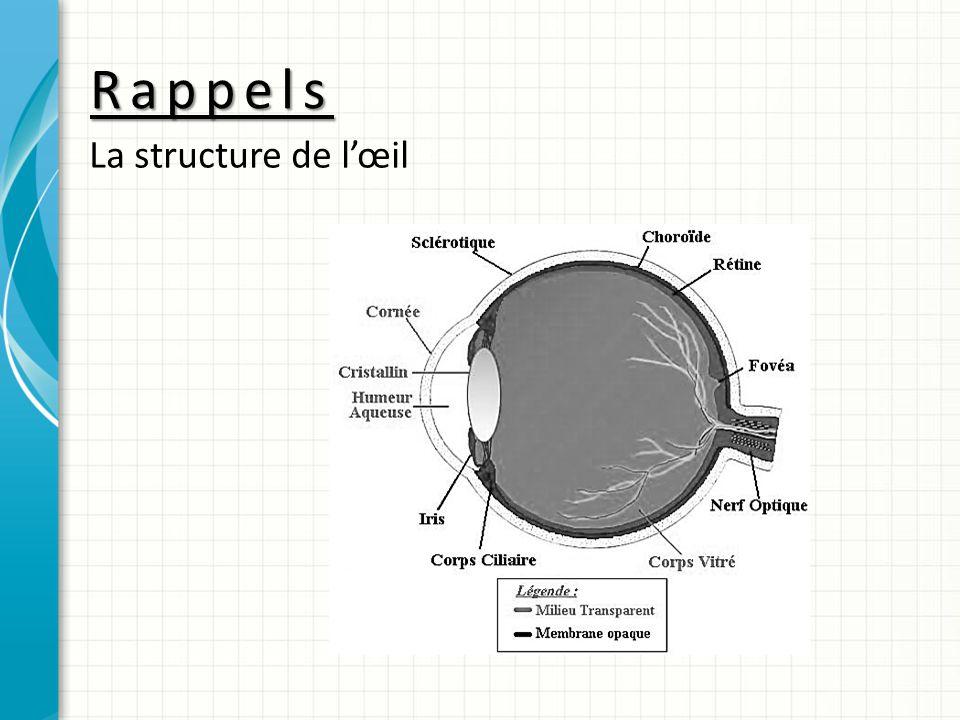 Rappels La structure de l'œil