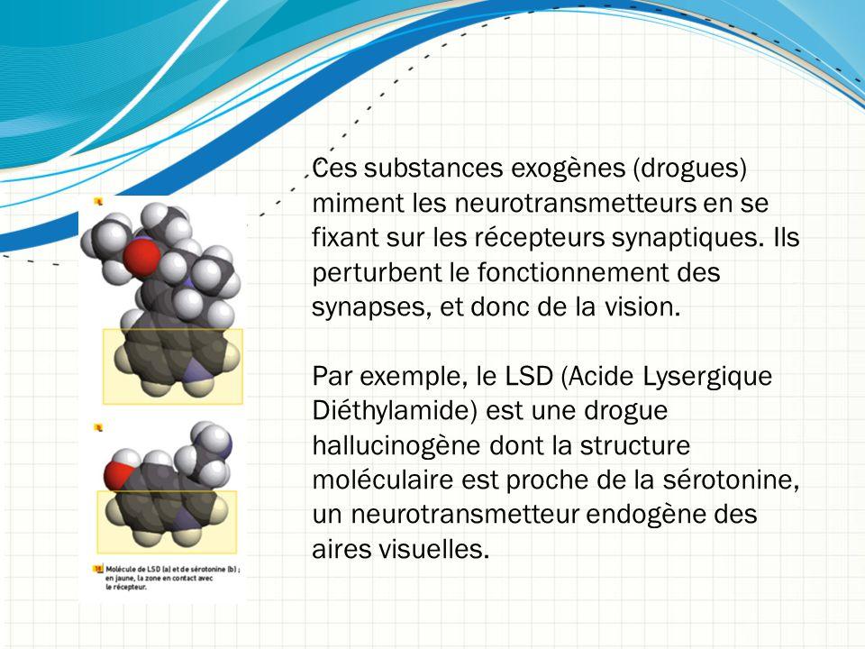 Ces substances exogènes (drogues) miment les neurotransmetteurs en se fixant sur les récepteurs synaptiques. Ils perturbent le fonctionnement des syna