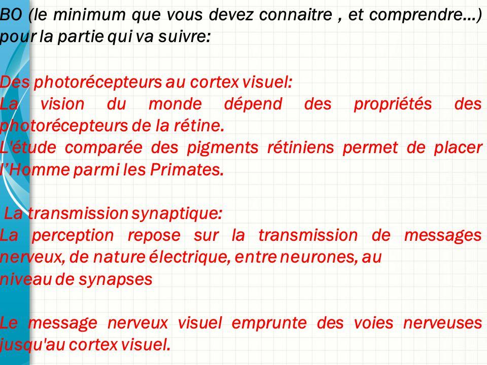 BO (le minimum que vous devez connaitre, et comprendre…) pour la partie qui va suivre: Des photorécepteurs au cortex visuel: La vision du monde dépend des propriétés des photorécepteurs de la rétine.