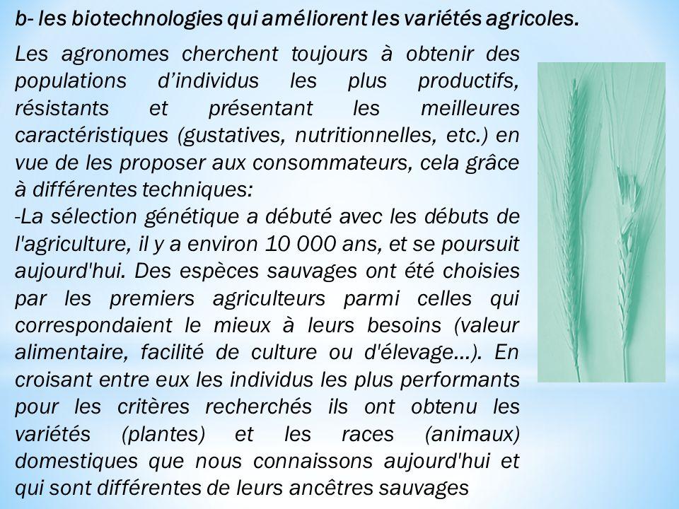 Les agronomes cherchent toujours à obtenir des populations d'individus les plus productifs, résistants et présentant les meilleures caractéristiques (