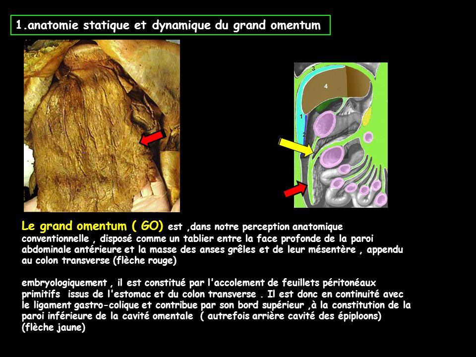 1.anatomie statique et dynamique du grand omentum Le grand omentum ( GO) est,dans notre perception anatomique conventionnelle, disposé comme un tablie
