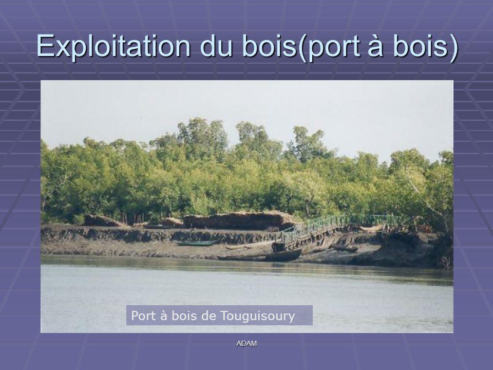 ADAM Exploitation du bois(port à bois) Port à bois de Touguisoury