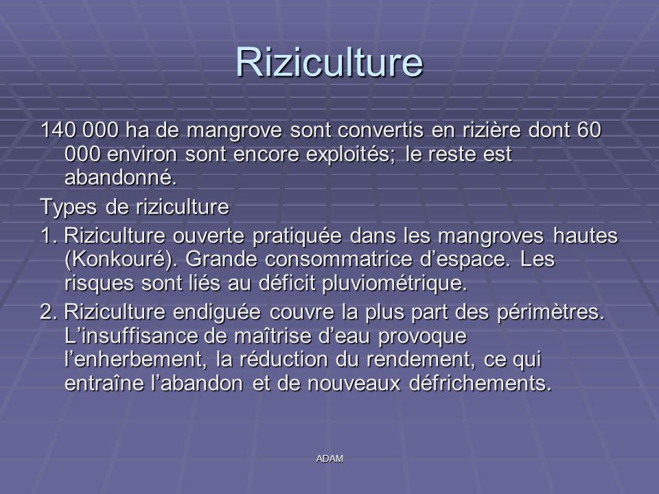 ADAM Riziculture 140 000 ha de mangrove sont convertis en rizière dont 60 000 environ sont encore exploités; le reste est abandonné. Types de rizicult