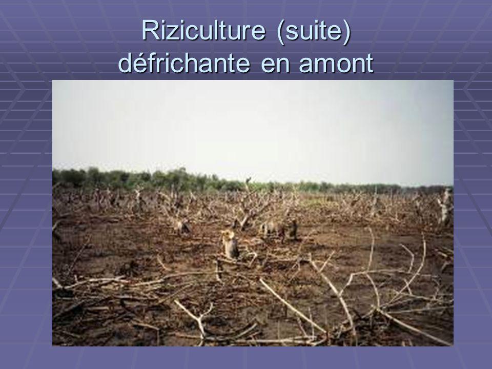 ADAM Riziculture (suite) défrichante en amont