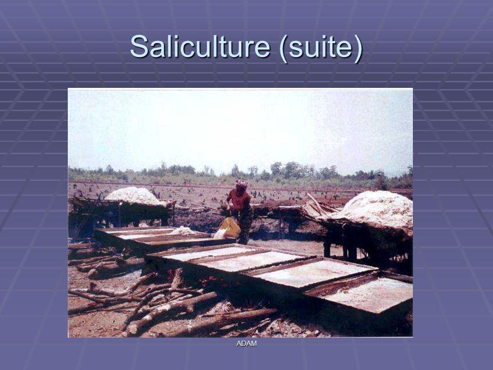 ADAM Saliculture (suite)