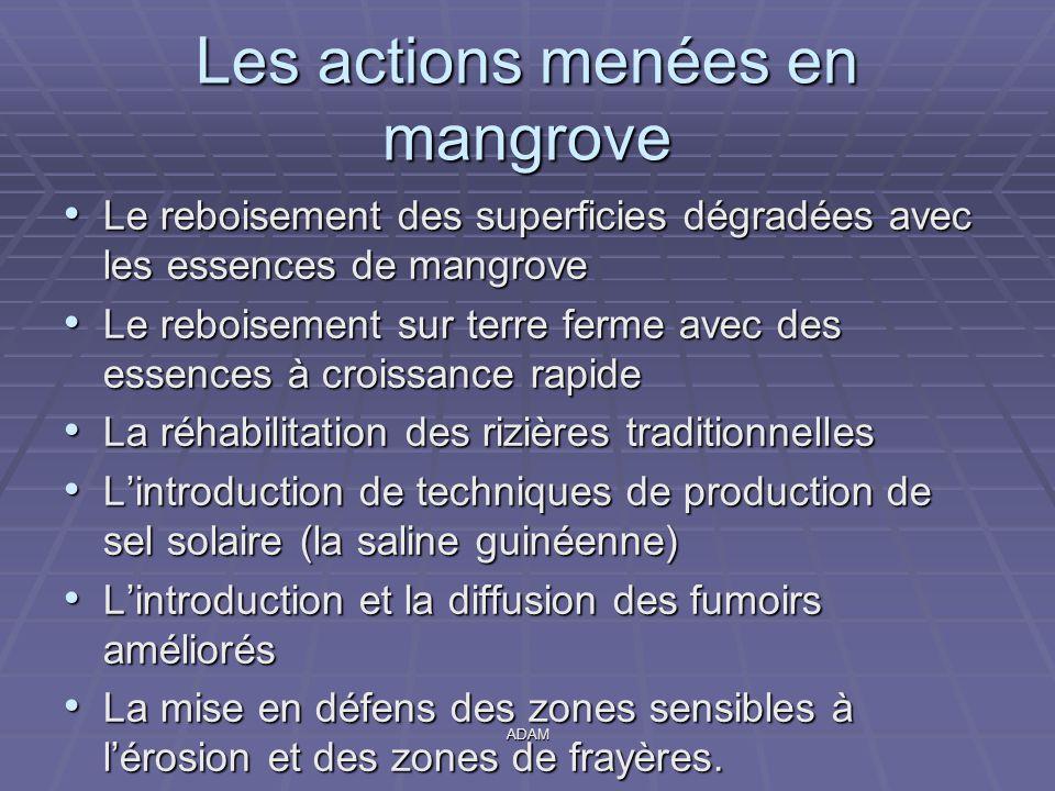 ADAM Les actions menées en mangrove Le reboisement des superficies dégradées avec les essences de mangrove Le reboisement des superficies dégradées av
