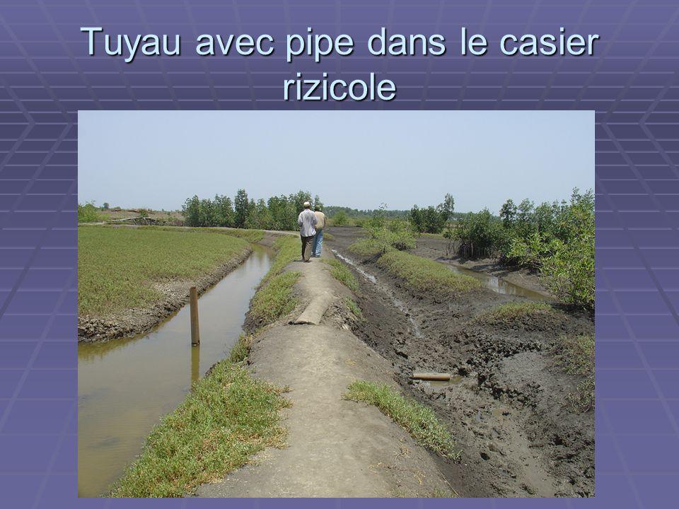ADAM Tuyau avec pipe dans le casier rizicole